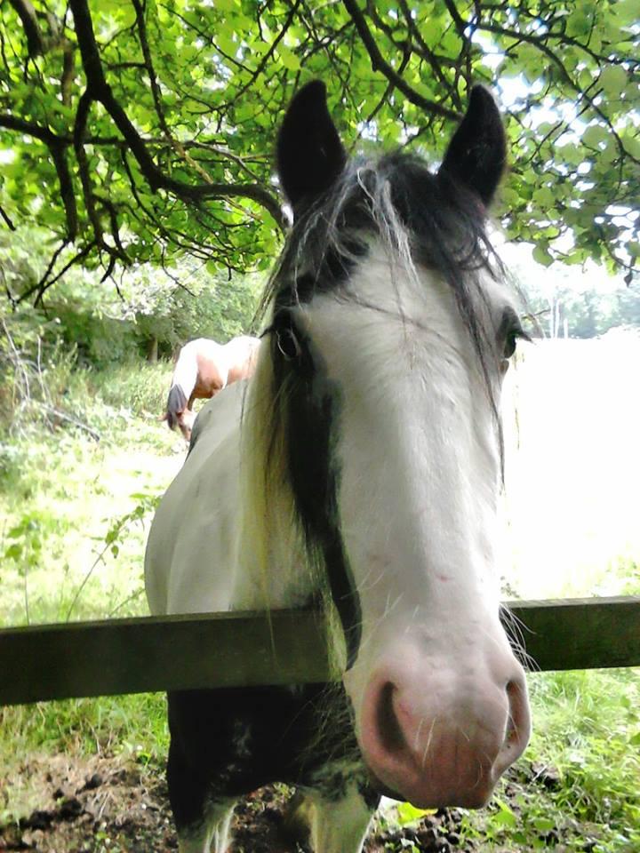 glonczi_erno004_horse